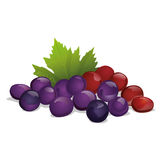 Grapes. An illustration of grapes on neutral background Stock Images