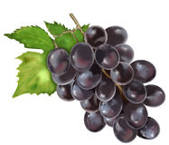 Grapes Illustration Stock Images