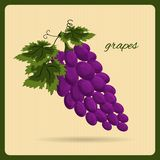 Grapes an illustration in a retro style. Stock Photo