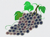 Grapes. Image of a grapes on a transparent background Stock Image