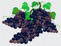Grapes. Image of a grapes on a transparent background Royalty Free Stock Photos