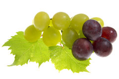 Grapes Isolated Stock Image