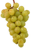 Grapes isolated on white Stock Images