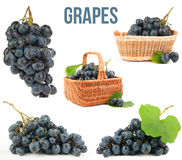 Grapes isolated. On white background Royalty Free Stock Photography
