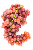 Grapes isolated Royalty Free Stock Image
