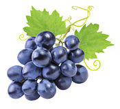 Grapes isolated on the white royalty free stock image