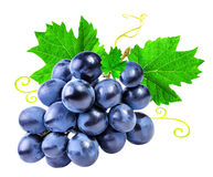 Grapes isolated on the white. Background Royalty Free Stock Photo