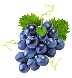 Grapes isolated on the white Stock Images