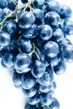 Grapes. Isolation on white Stock Photo