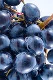 Grapes. Isolation on white Stock Image