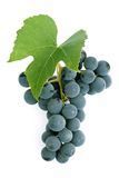 Grapes and leaf Stock Images
