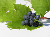 Grapes on leaf Royalty Free Stock Images