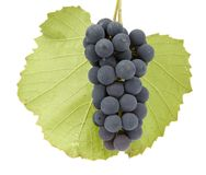 Grapes with leaf. Bunch of grapes with leaf on white background Stock Image