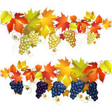 Grapes with leaves Royalty Free Stock Photos