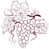 Grapes With Leaves royalty free illustration