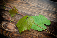 Grapes leaves against old wooden Royalty Free Stock Images