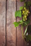Grapes with leaves Stock Photos