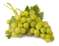 Grapes with leaves isolated. Green grapes with leaves isolated royalty free stock images