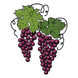 Grapes with leaves isolated on white background. Royalty Free Stock Photos