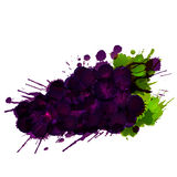 Grapes made of colorful splashes. On white background Stock Image