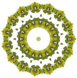 Grapes mandala. Wine grapes mandala Stock Images