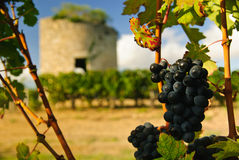 Grapes and medieval tower Royalty Free Stock Images