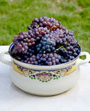 Grapes in the metal pot Stock Images