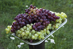 Grapes on metal tray Stock Image