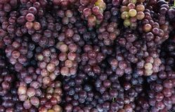 Grapes niagara, retail of delicious red grapes royalty free stock photo
