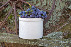 Grapes in old crock Royalty Free Stock Image