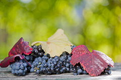 Grapes outdoor Royalty Free Stock Image