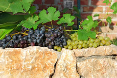 Grapes over stone fence Royalty Free Stock Images