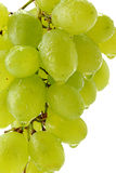Grapes over white background. Grapes isolated on white background Stock Photo