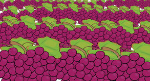 Grapes pattern Royalty Free Stock Photography