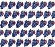 Grapes pattern  Stock Photos