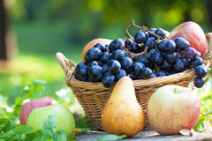 Grapes, pears and apples Royalty Free Stock Images