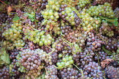 Grapes pile Stock Photo