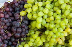 Grapes Royalty Free Stock Photography