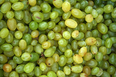 Grapes. Pile of white table grapes Stock Photography