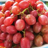 Grapes on the plate. Close up to whole grapes on the plate Stock Image