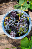 Grapes in plate stock images