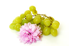 Grapes and purple chrysanthemum Royalty Free Stock Images