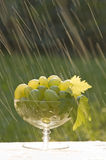 Grapes in the rain Royalty Free Stock Photo