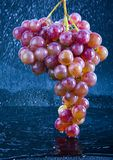 Grapes in the rain Stock Photo