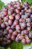 Grapes red Stock Photos