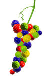 Grapes in red, green, yellow and blue paint Stock Photos