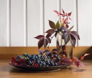 plate grapes red leaves blue berries still life stock images