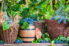 Grapes and red wine in a wicker basket Royalty Free Stock Photos