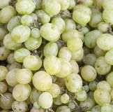Grapes for sale on the sun light Stock Images