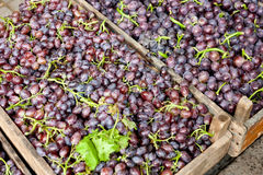 Grapes for sale. Violet grapes for sale beside street in China Royalty Free Stock Photography